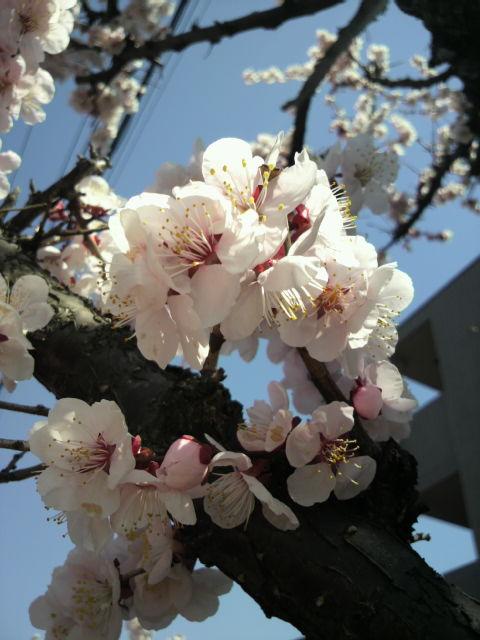 春はもうすぐ